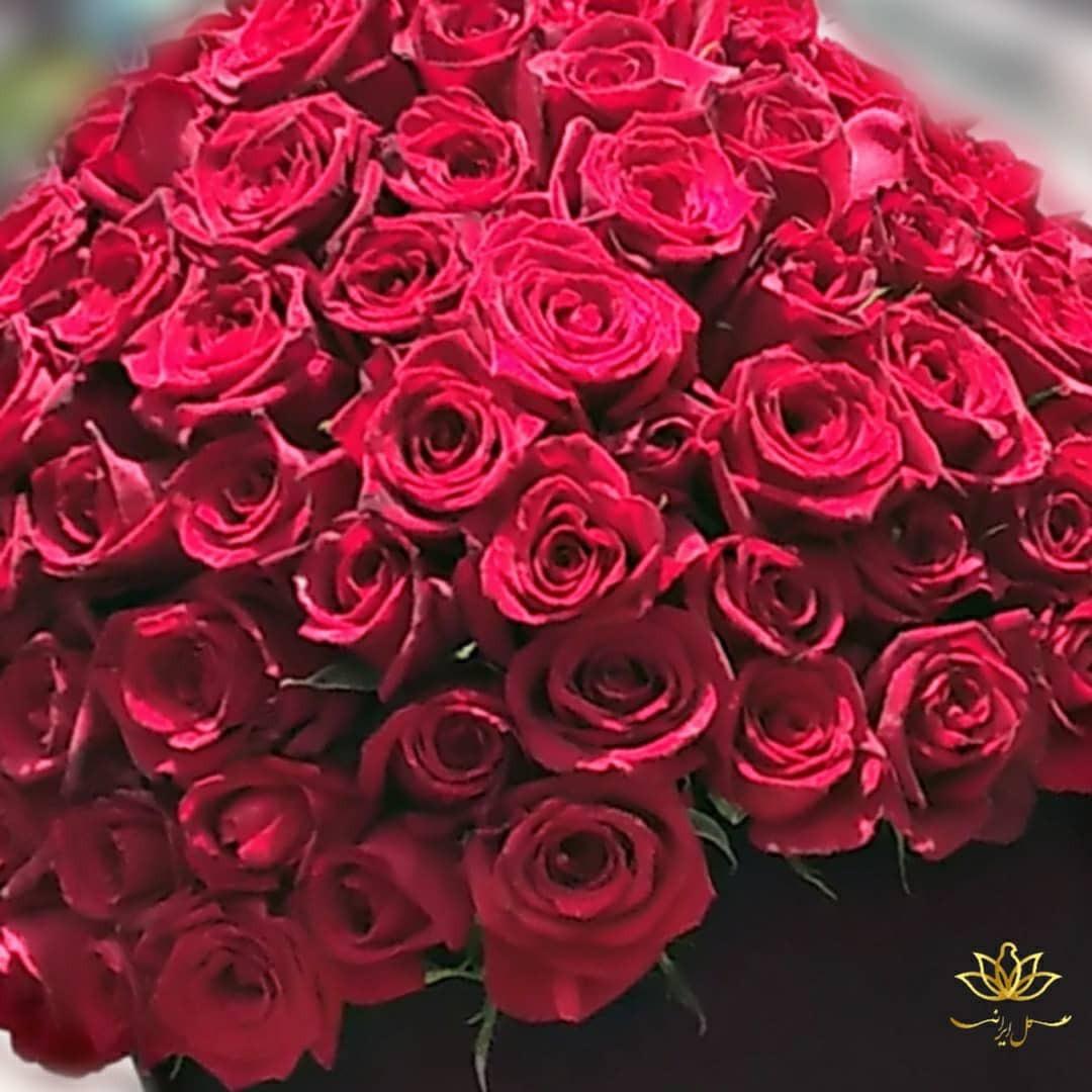 سفارش آنلاین باکس گل رز صد شاخه ارسال رایگان باکس گل رز باکس رز قرمز بازار آنلاین گل و گیاه باکس رز ارزان