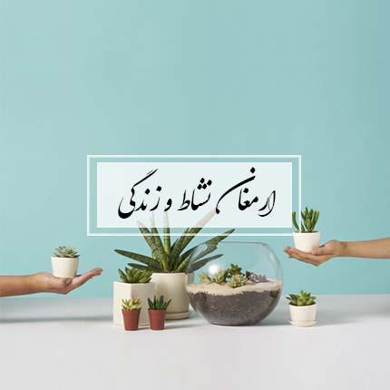گل ایرانی ارمغان نشاط و زندگی خرید گلدان ریشه ای